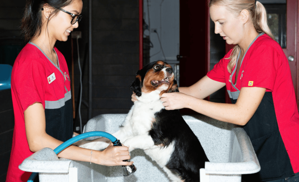 Two veterinarians giving a dog a bath