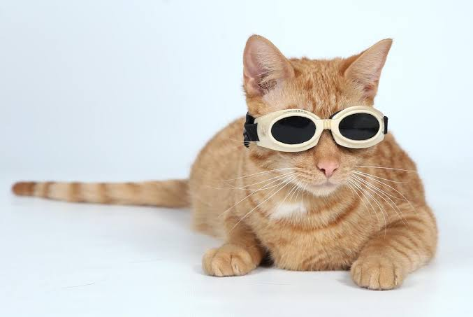 How Laser Therapy helps your Cat with Stomatitis?
