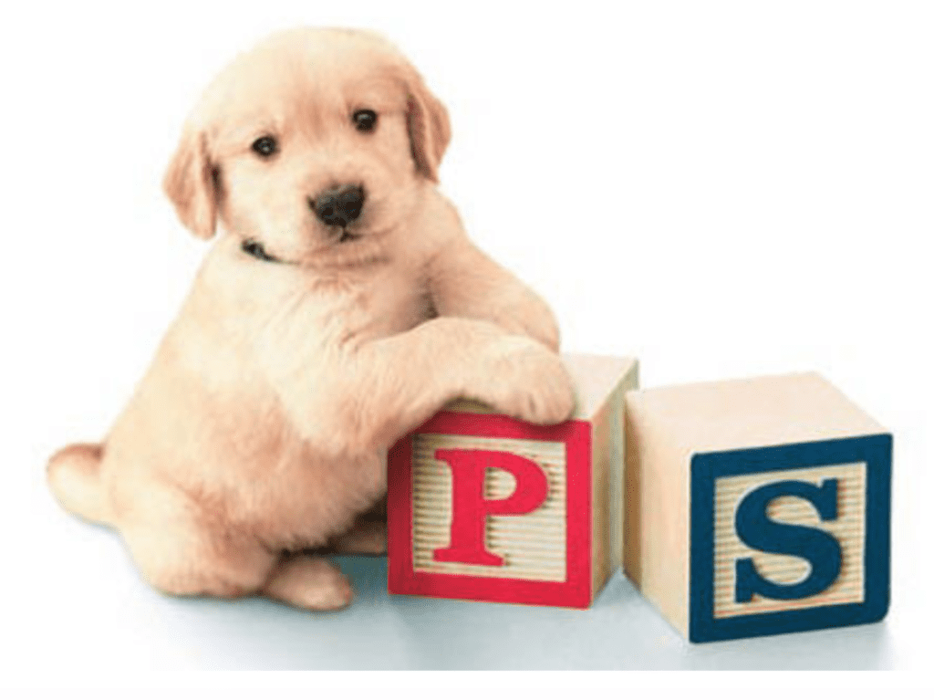 A puppy playing with letter boxes