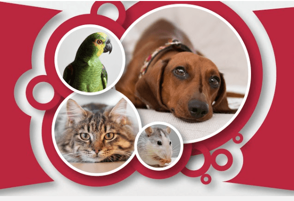 A parrot, a dog, and cat with circle borders