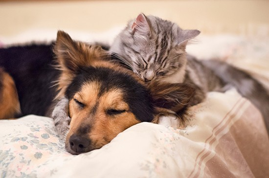 Pet Separation Anxiety and How Yeronga Accommodation can help you