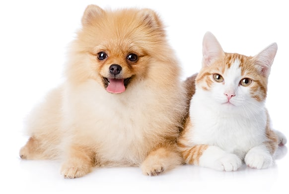 What are the most Common Animal Emergencies and what to do?