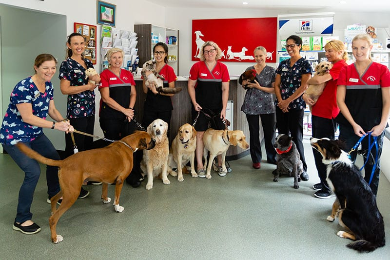 Dr Anita Bean and other medical staff with dogs