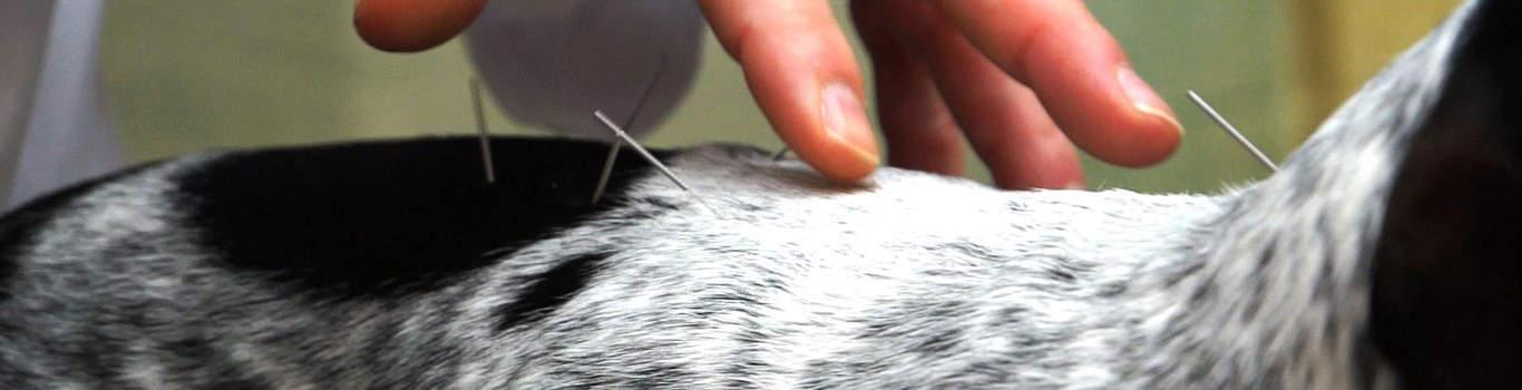 A veterinarian hands assessing an animal