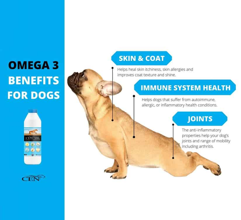 omega 3 benefits for dogs